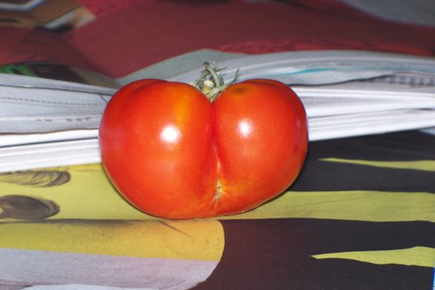 "one of my 2008 tomatoes ""the butt"""